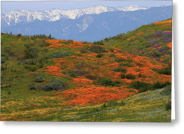 Greeting Card featuring the photograph Spring Wildflower Display At Diamond Lake In California by Jetson Nguyen