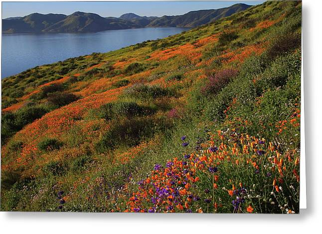 Greeting Card featuring the photograph Spring Wildflower Season At Diamond Lake In California by Jetson Nguyen