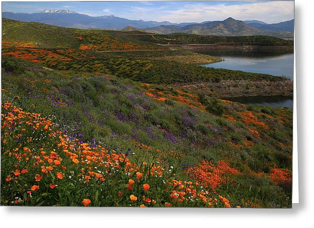 Greeting Card featuring the photograph Spring Wildflowers At Diamond Lake In California by Jetson Nguyen