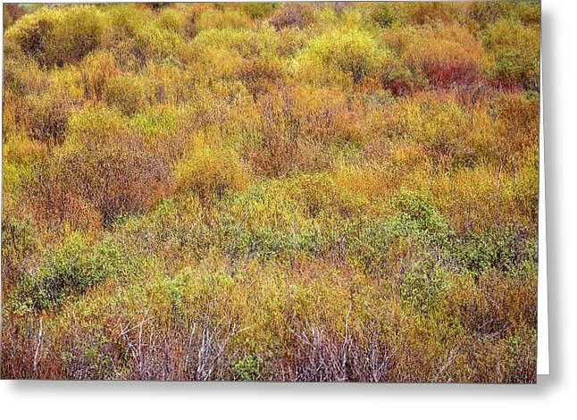 Spring Willows Greeting Card by Todd Klassy