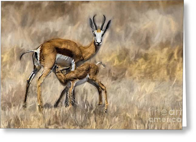 Springbok Mom And Calf Greeting Card