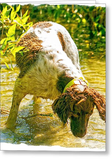 Springer Spaniel Field Greeting Card by Constantine Gregory
