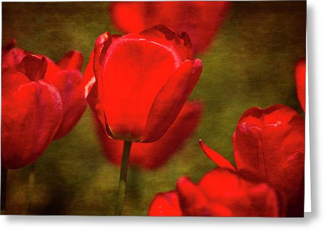 Springing Up Tulips Greeting Card by Karol Livote
