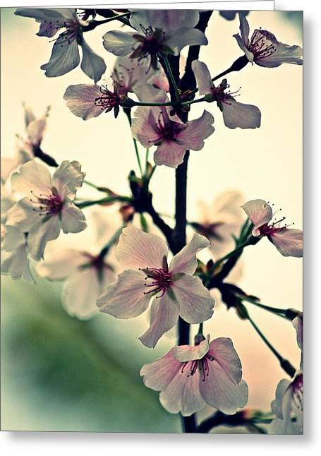 Spring's Delicate Dance Greeting Card