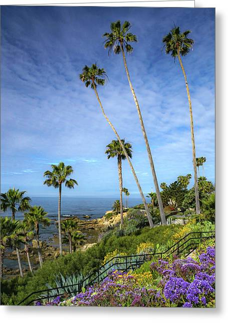 Springtime At Heisler Park Greeting Card by Cliff Wassmann