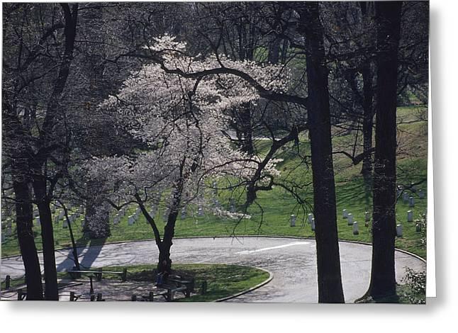 Springtime Blossoms Highlight Arlington Greeting Card by Raymond Gehman