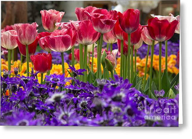 Springtime Colors Greeting Card by Amy Sorvillo