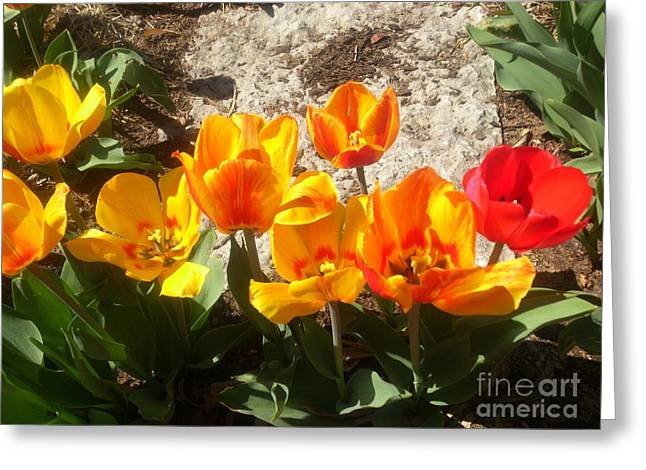 Greeting Card featuring the photograph Springtime Flowers by Rachel Maynard