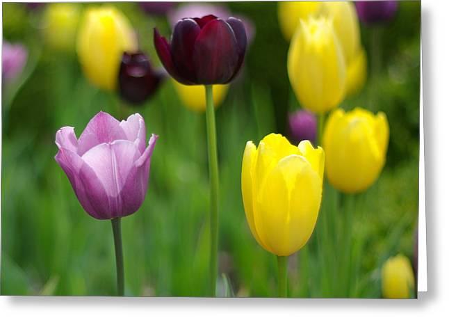 Springtime Glory Greeting Card