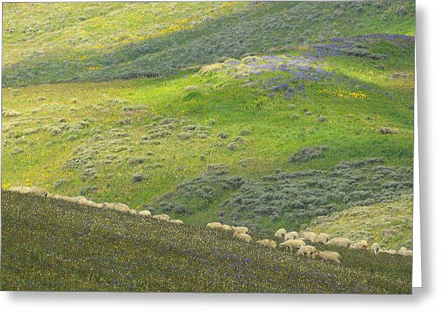 Greeting Card featuring the photograph Springtime Graze.. by Al  Swasey