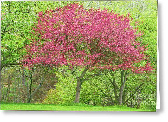 Greeting Card featuring the photograph Springtime Impressions by Brenda Tharp