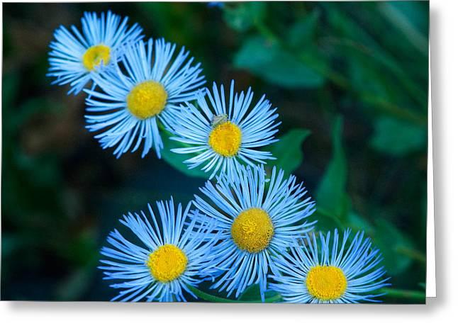 Springtime In Grand Teton Greeting Card by Sandra Bronstein