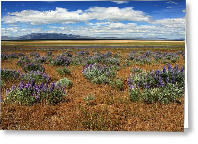 Dry Lake Greeting Cards - Springtime In Honey Lake Valley Greeting Card by James Eddy