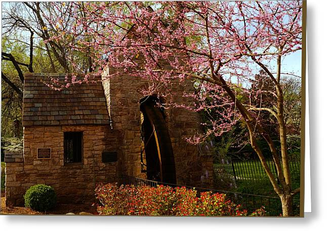 Springtime In Knoxville Greeting Card by Beth Collins