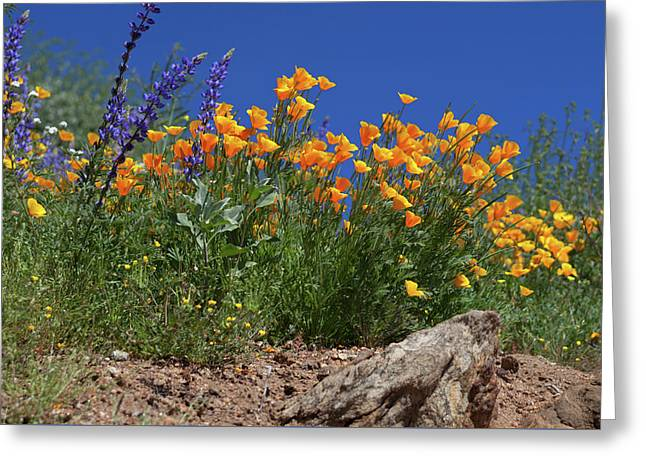 Greeting Card featuring the photograph Springtime In Southern California by Cliff Wassmann