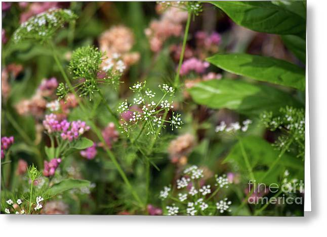 Springtime In The Florida Scrub Greeting Card by William Tasker