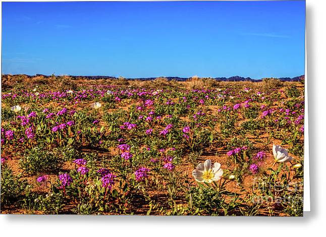 Greeting Card featuring the photograph Springtime In The Sonoran Desert by Robert Bales