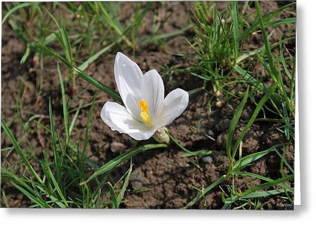 Springtime Greeting Card by Marija Djedovic