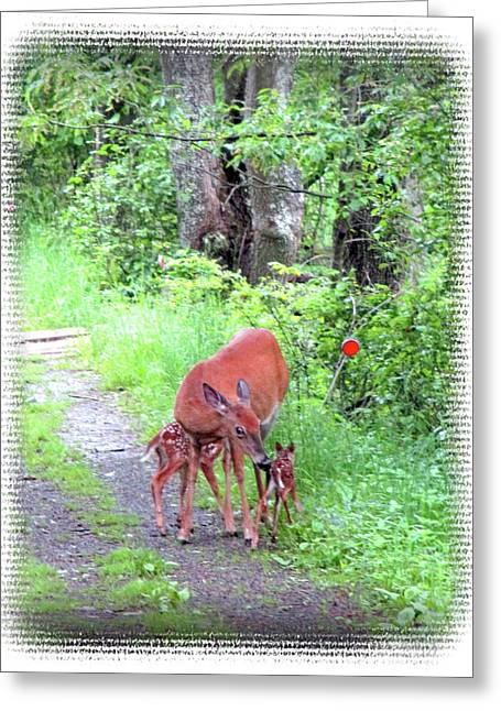 Springtime Moment - Whitetail Deer And Fawns Greeting Card by Patricia Keller