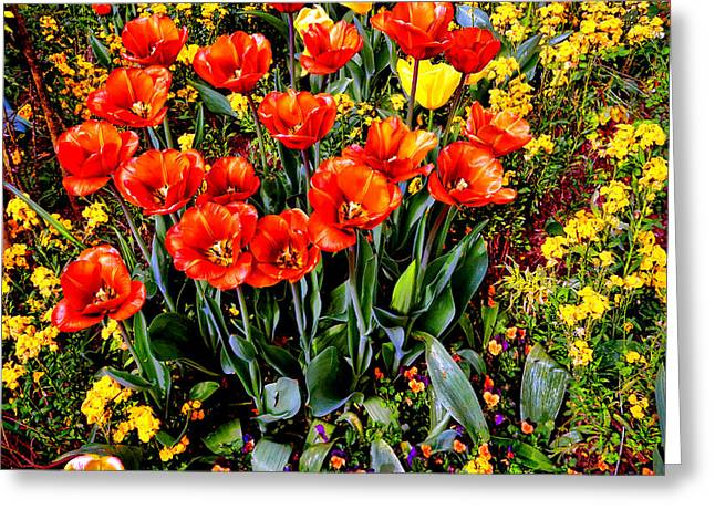 Springtime Greeting Card by Olivier Le Queinec