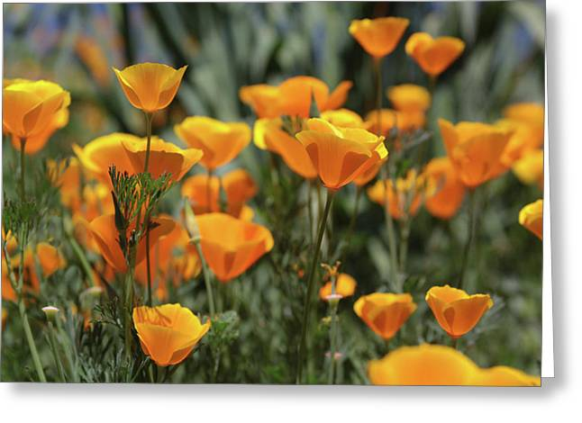 Greeting Card featuring the photograph Springtime  Super Bloom In California by Cliff Wassmann