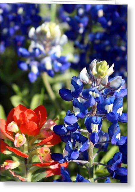 Springtime Texas Colors Greeting Card