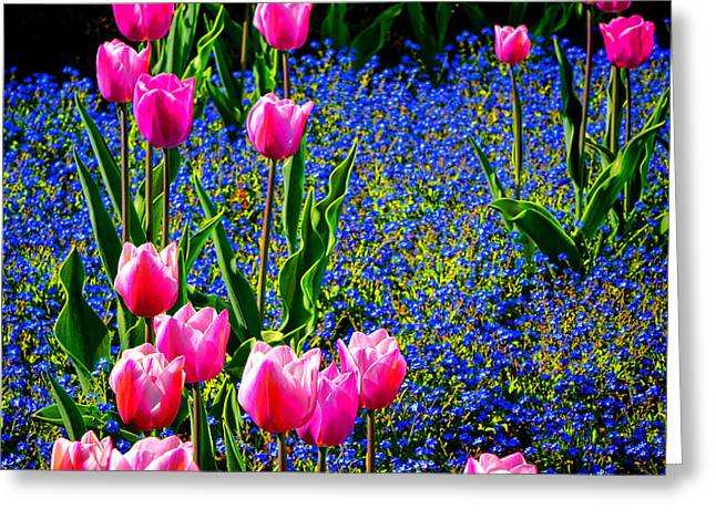 Springtime Tulips Greeting Card by Olivier Le Queinec