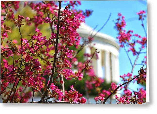 Greeting Card featuring the photograph Springtime Vibe by Mitch Cat