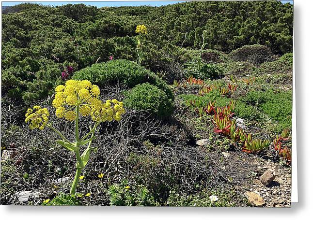 Springtime Wildflowers Along Coastal Hiking Trail - Portugal Greeting Card by Connie Sue White