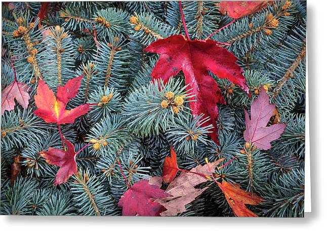 Greeting Card featuring the photograph Spruce And Maple by Mark Mille
