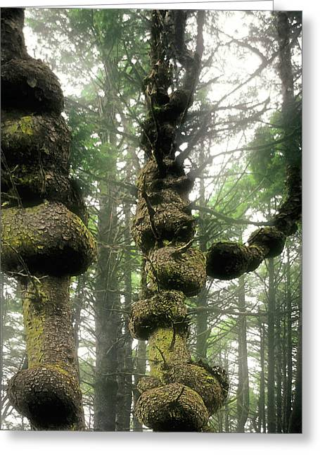 Spruce Burl Olympic National Park Beach 1 Wa Greeting Card by Christine Till