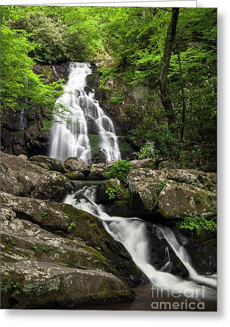 Greeting Card featuring the photograph Spruce Flats Falls - D009919 by Daniel Dempster