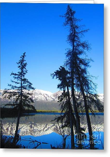 Spruce Stories Greeting Card by Heather Hiland