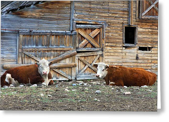 Outbuildings Greeting Cards - Squires Herefords by the Rustic Barn Greeting Card by Karon Melillo DeVega