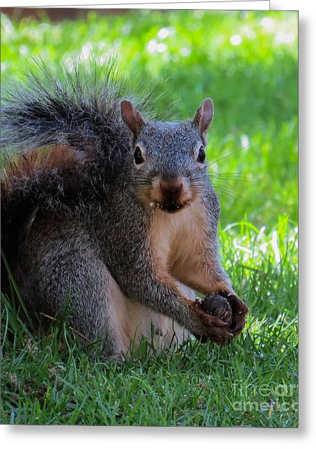 Squirrel 2 Greeting Card