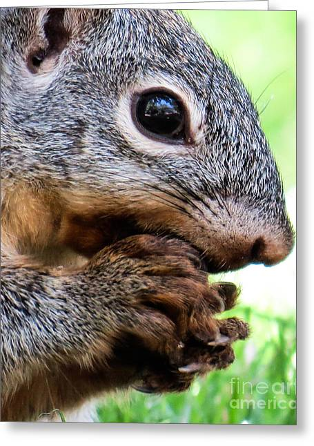 Squirrel 3 Greeting Card