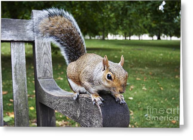 Squirrel Bench Greeting Card