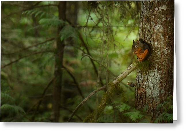 Squirrel Breaks The Silence Greeting Card