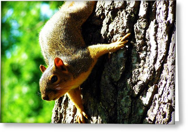 Squirrel Contact Greeting Card