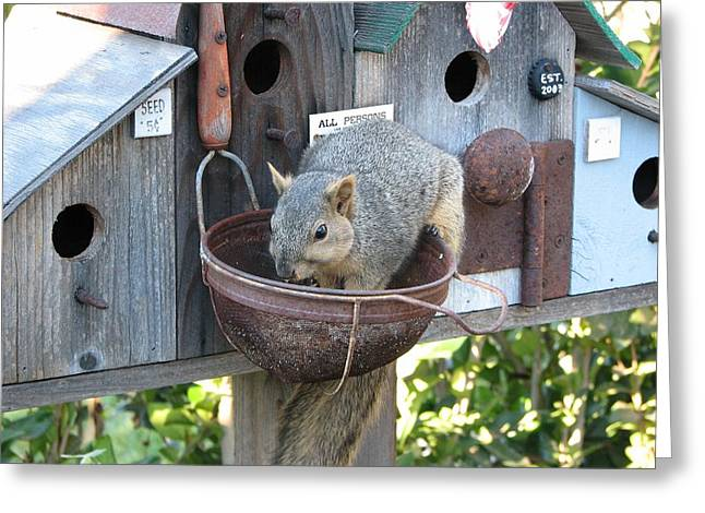 Squirrel Feeding Greeting Card