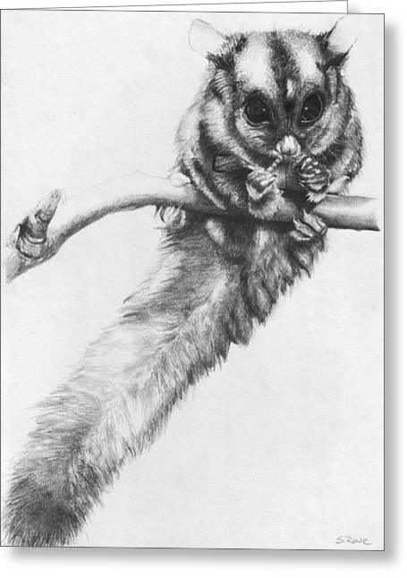 Greeting Card featuring the drawing Squirrel Glider by Shawna Rowe