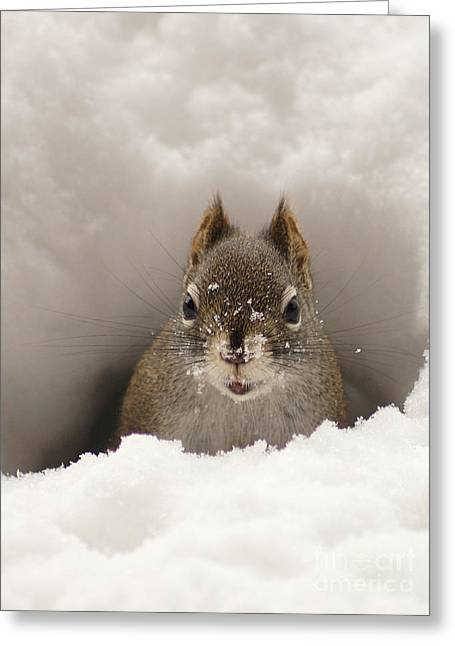 Squirrel In A Snow Tunnel Greeting Card by Stanza Widen