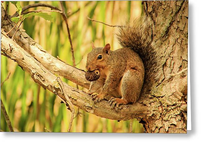 Squirrel In A Tree In The Marsh Greeting Card