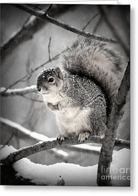 Greeting Card featuring the photograph Squirrel  In The Maple Tree 2 by Lila Fisher-Wenzel