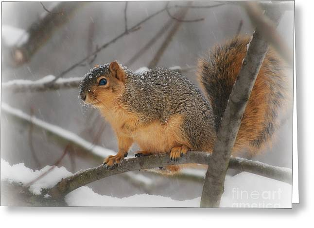 Greeting Card featuring the photograph Squirrel  In The Maple Tree 3 by Lila Fisher-Wenzel