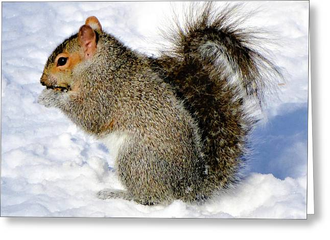 Squirrel In Winter Greeting Card