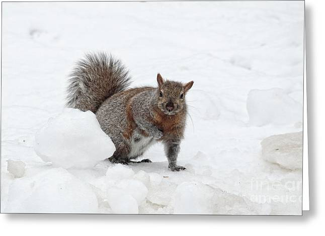 Greeting Card featuring the photograph Squirrel In Winter Snow by Charline Xia