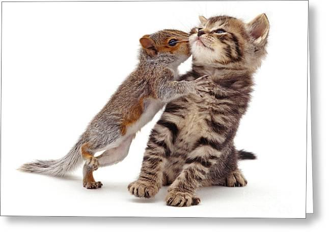 Squirrel Kiss Greeting Card