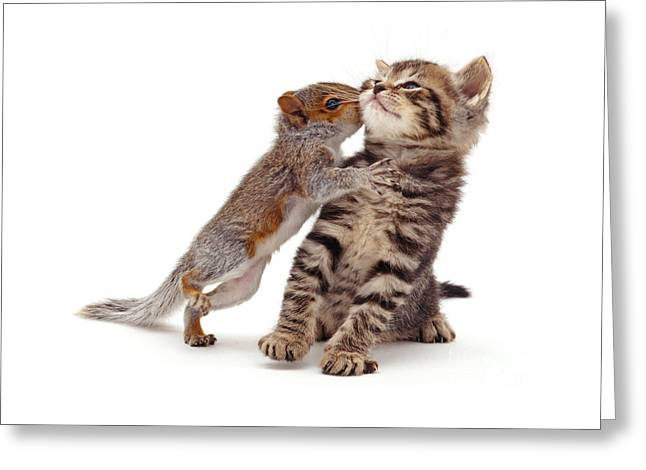 Squirrel Kiss Greeting Card