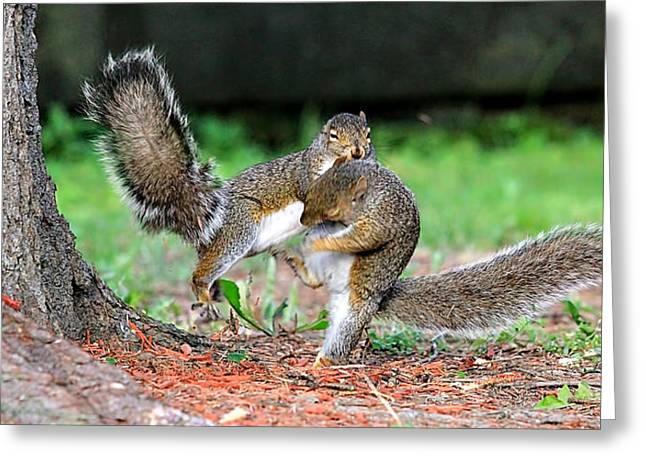 Squirrel Kung-fu  Greeting Card by Celestial  Blue